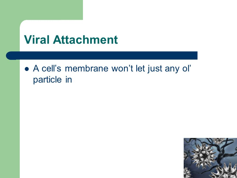 Viral Attachment A cell's membrane won't let just any ol' particle in