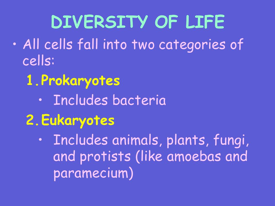 DIVERSITY OF LIFE All cells fall into two categories of cells: 1.Prokaryotes Includes bacteria 2.Eukaryotes Includes animals, plants, fungi, and protists (like amoebas and paramecium)