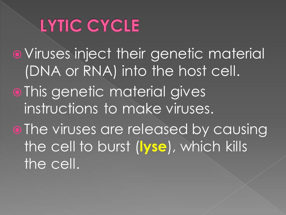  Viruses inject their genetic material (DNA or RNA) into the host cell.