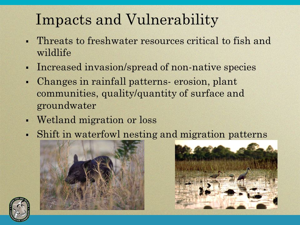 Impacts and Vulnerability  Threats to freshwater resources critical to fish and wildlife  Increased invasion/spread of non-native species  Changes in rainfall patterns- erosion, plant communities, quality/quantity of surface and groundwater  Wetland migration or loss  Shift in waterfowl nesting and migration patterns