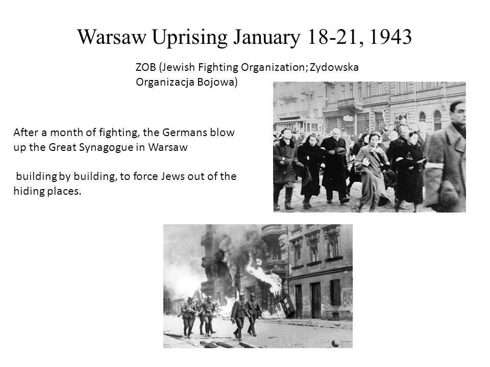 zob jewish fighting organization