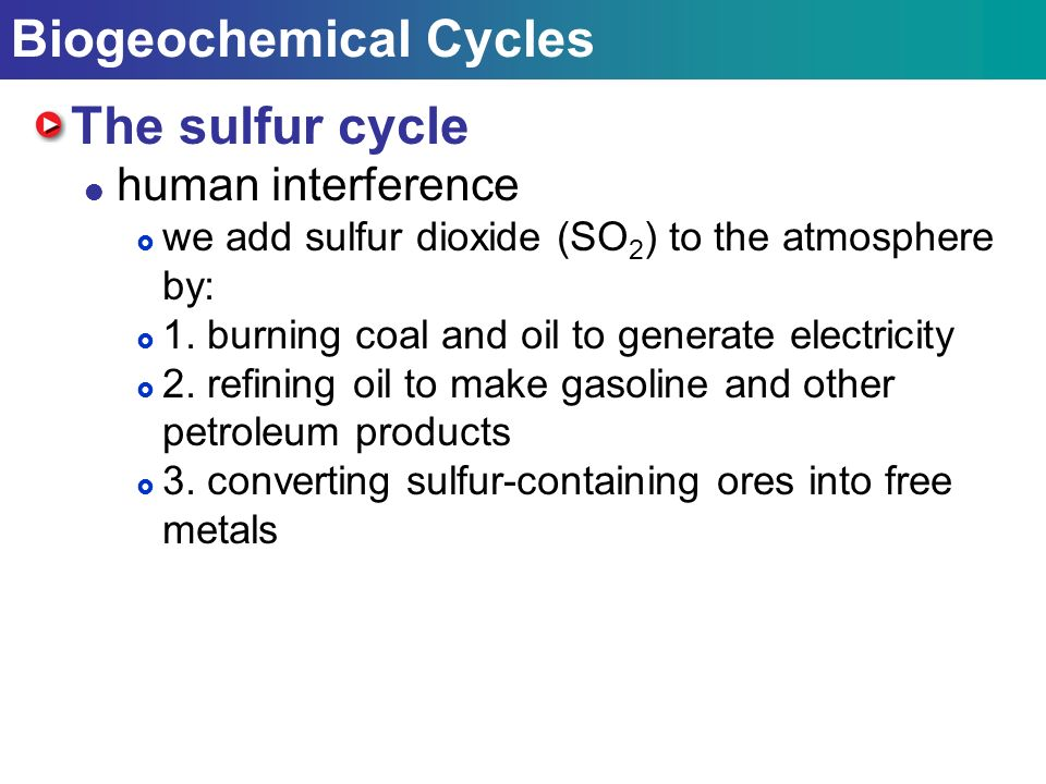 Biogeochemical Cycles The sulfur cycle  human interference  we add sulfur dioxide (SO 2 ) to the atmosphere by:  1.