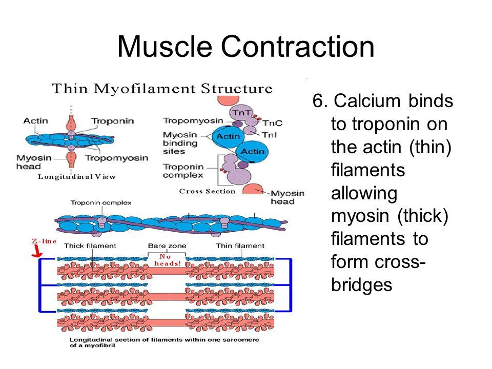 Muscle chap coarse bonks