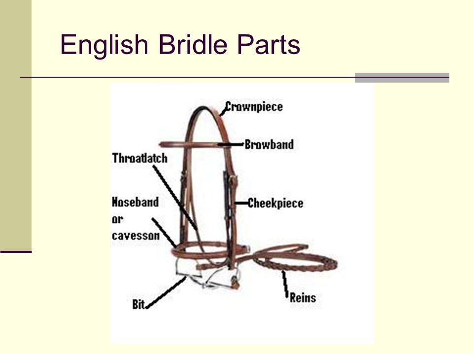 Maryland 4-H Horsemanship Standards Knowledge Levels 1- 2 Dr