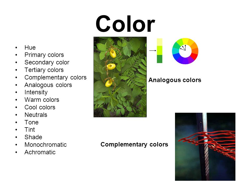Color Hue Primary colors Secondary color Tertiary colors Complementary colors Analogous colors Intensity Warm colors Cool colors Neutrals Tone Tint Shade Monochromatic Achromatic Complementary colors Analogous colors