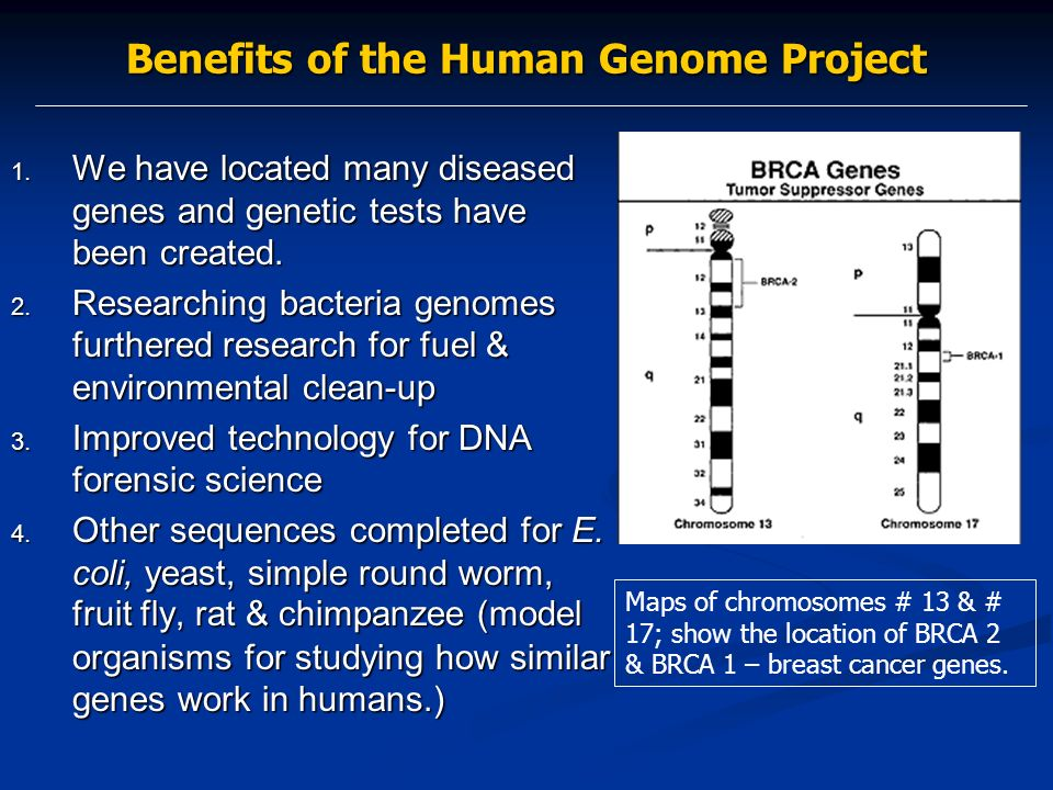 an overview of the human genome project in the scientific community The human genome initiative is a worldwide research effort that has the goal of analyzing the sequence of human dna and determining the location of all human genes begun in 1990, the us human genome project was originally planned to last 15 years but now is projected to be complete in 13 years.
