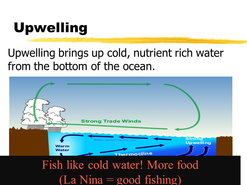 Upwelling Upwelling brings up cold, nutrient rich water from the bottom of the ocean.