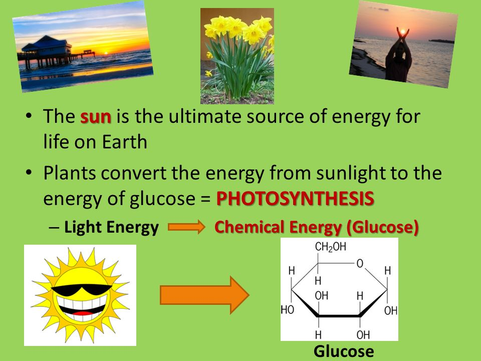 sun The sun is the ultimate source of energy for life on Earth PHOTOSYNTHESIS Plants convert the energy from sunlight to the energy of glucose = PHOTOSYNTHESIS Chemical Energy (Glucose) – Light Energy Chemical Energy (Glucose) Glucose