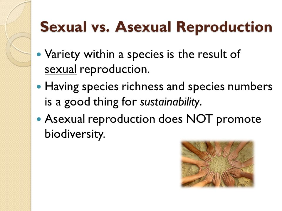 Sexual vs. Asexual Reproduction Variety within a species is the result of sexual reproduction.