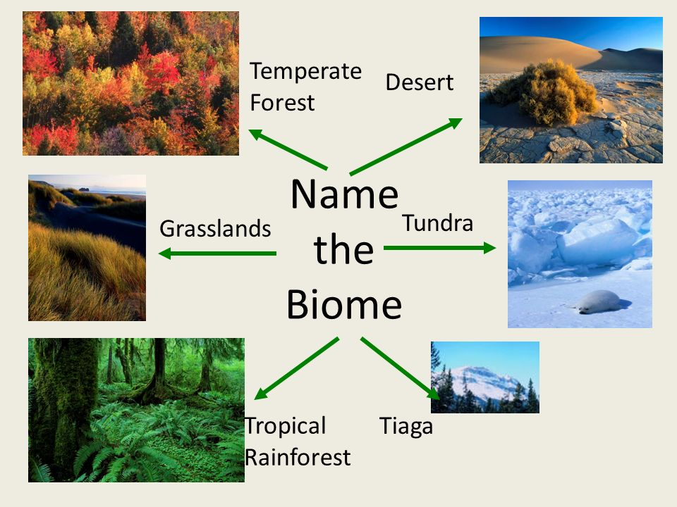 Name the Biome Desert Temperate Forest Tundra Tiaga Tropical Rainforest Grasslands