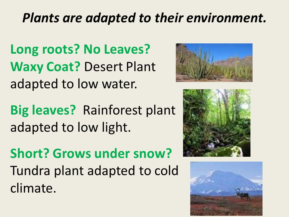 Plants are adapted to their environment. Long roots.