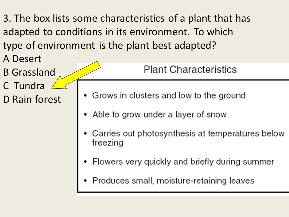 3. The box lists some characteristics of a plant that has adapted to conditions in its environment.