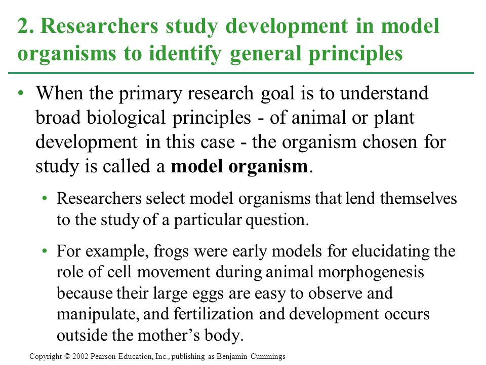 When the primary research goal is to understand broad biological principles - of animal or plant development in this case - the organism chosen for study is called a model organism.