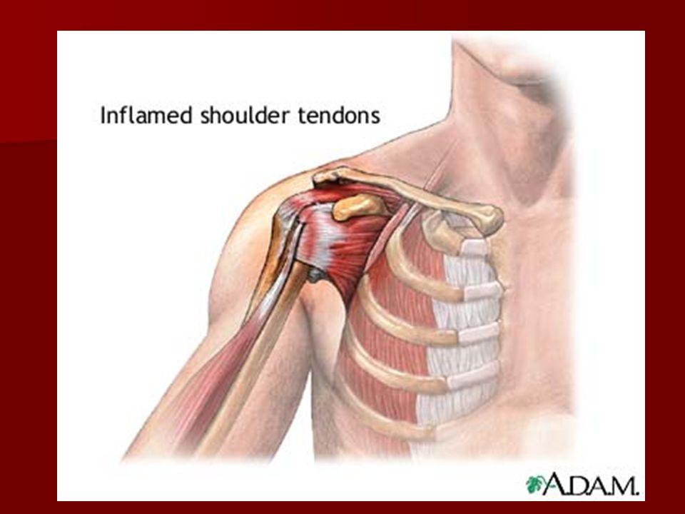 The Shoulder Anatomy Anatomy Movements Movements Injuries Injuries