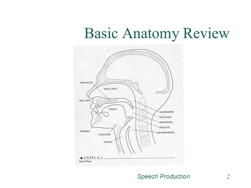 Speech Production1 Articulation And Resonance Vocal Tract As
