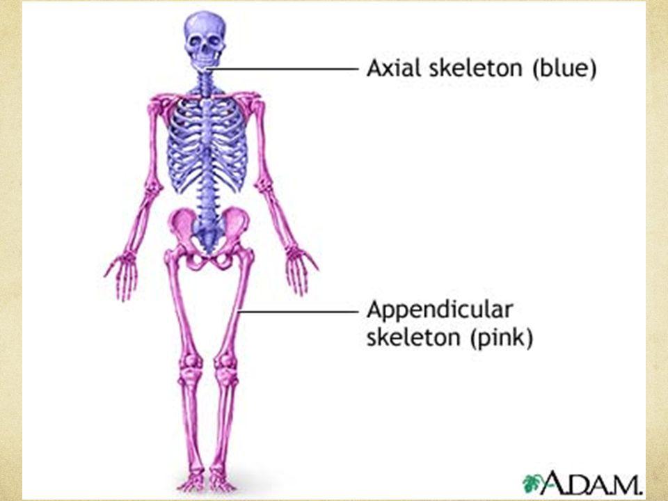 You The facial skeleton confirm