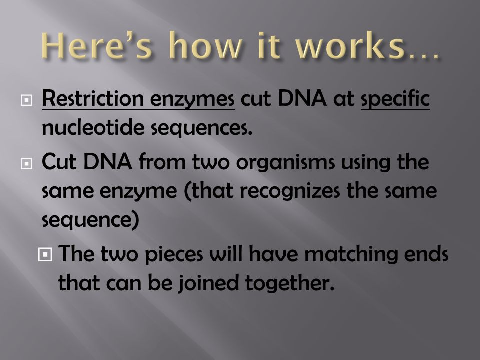  Restriction enzymes cut DNA at specific nucleotide sequences.
