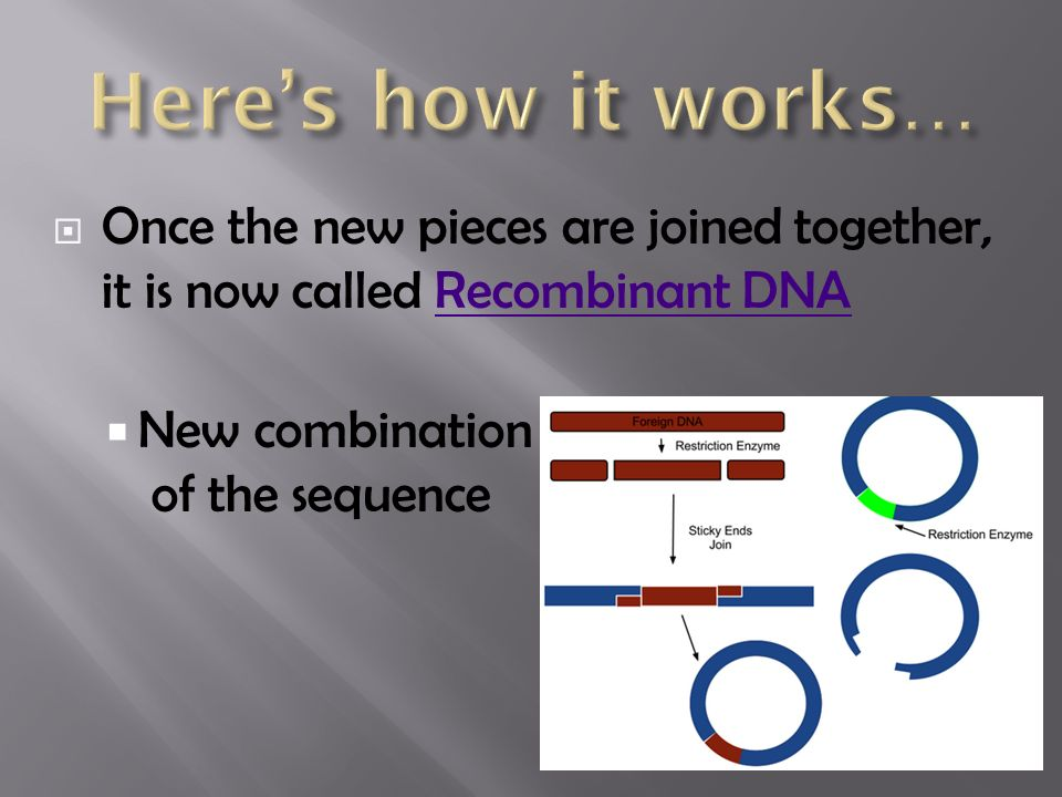 Once the new pieces are joined together, it is now called Recombinant DNARecombinant DNA  New combination of the sequence