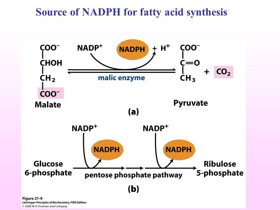 Fatty Acid Oxidation Ketone Bodies Fatty Acid Synthesis Av Lipid