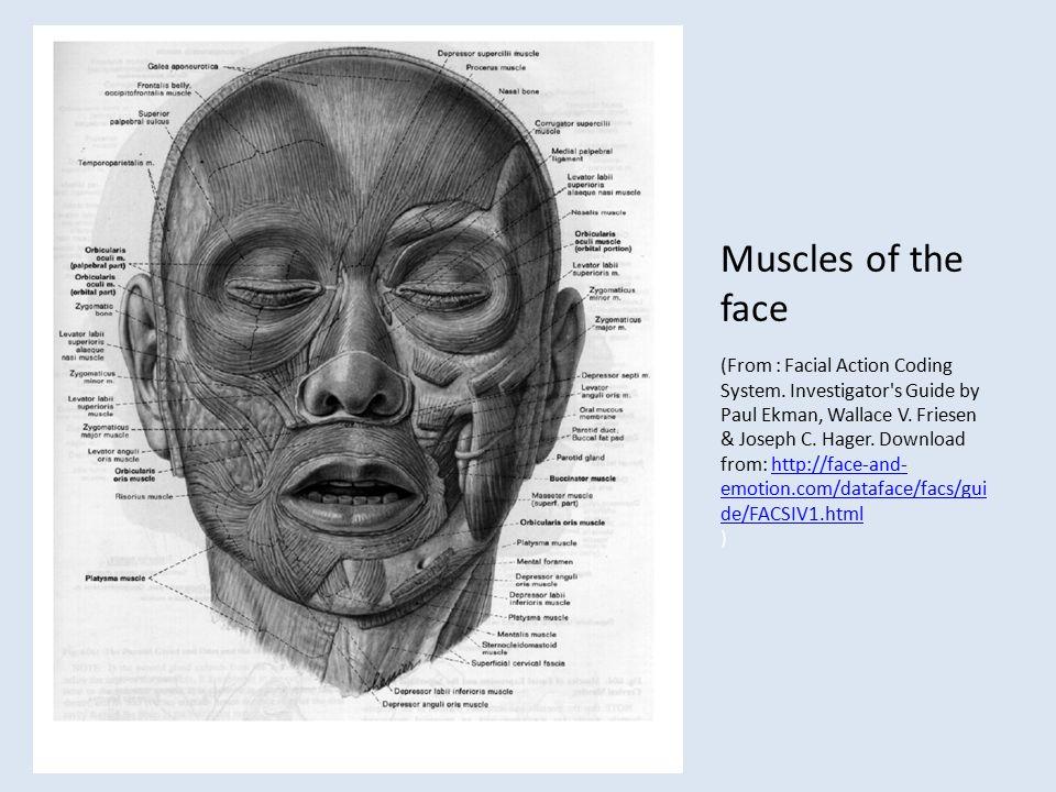 Facial action coding system manual