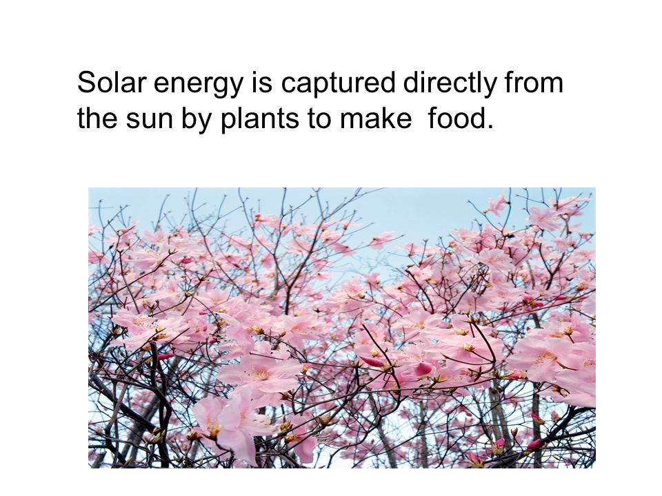 Sunlight, moving water, and wind are naturally occurring sources of energy.