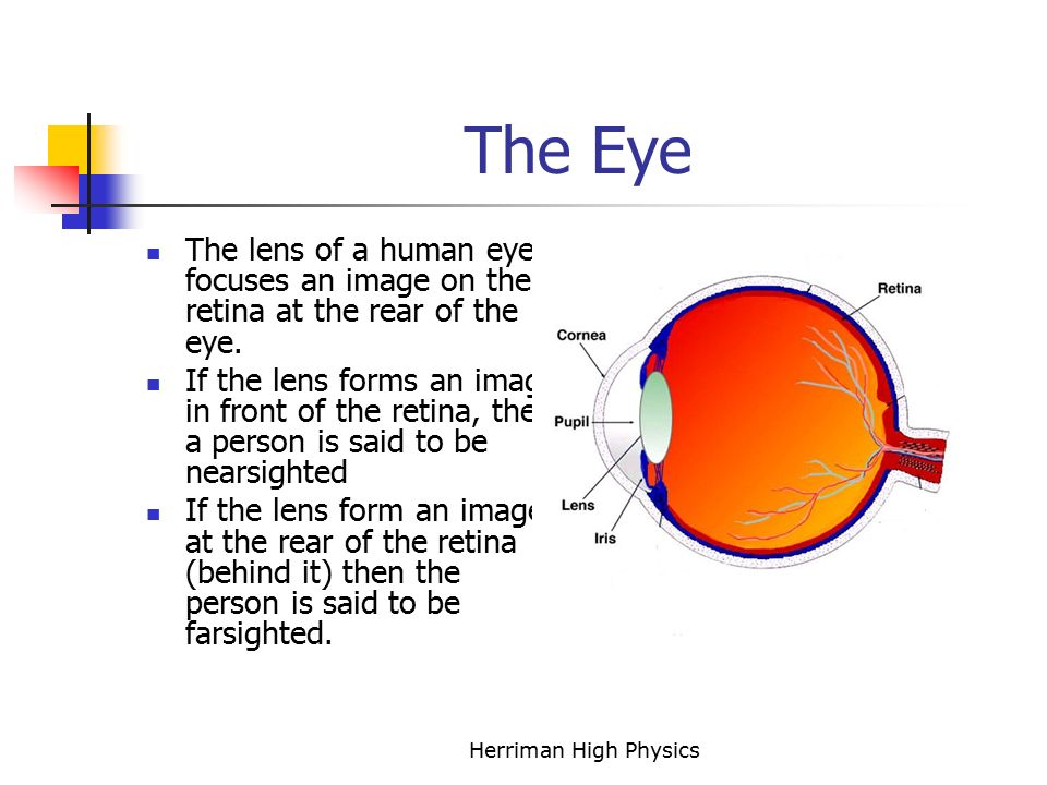 The Eye The lens of a human eye focuses an image on the retina at the rear of the eye.