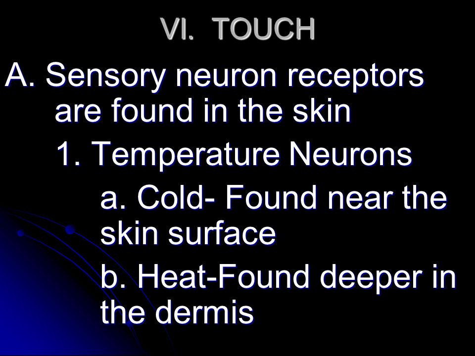VI. TOUCH A. Sensory neuron receptors are found in the skin 1.