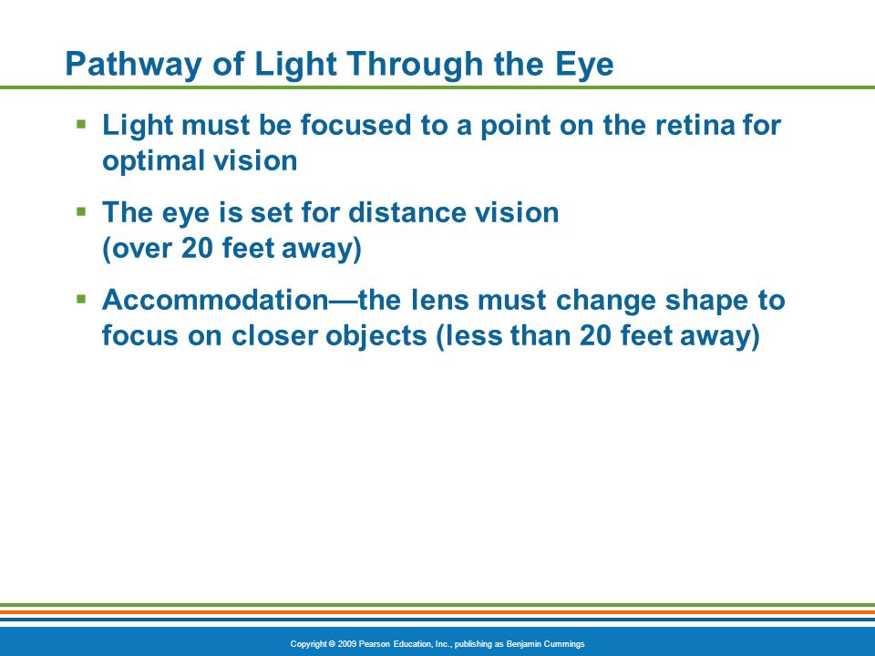 Copyright © 2009 Pearson Education, Inc., publishing as Benjamin Cummings Pathway of Light Through the Eye  Light must be focused to a point on the retina for optimal vision  The eye is set for distance vision (over 20 feet away)  Accommodation—the lens must change shape to focus on closer objects (less than 20 feet away)