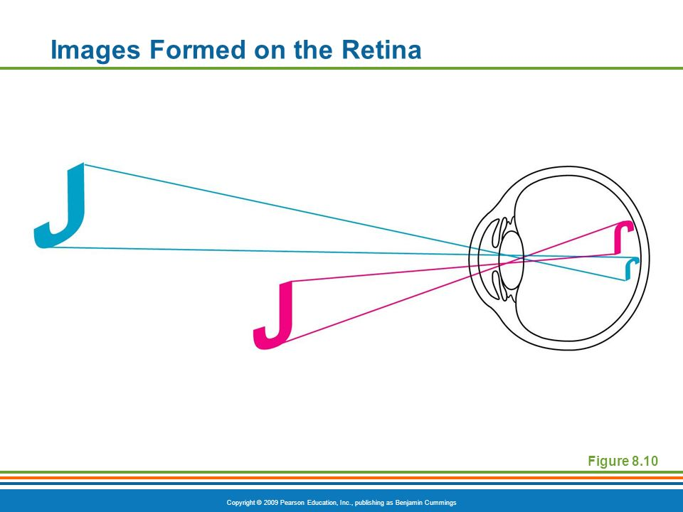 Copyright © 2009 Pearson Education, Inc., publishing as Benjamin Cummings Images Formed on the Retina Figure 8.10