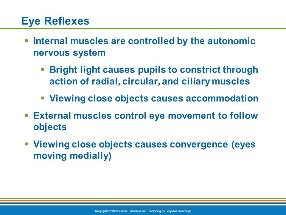 Copyright © 2009 Pearson Education, Inc., publishing as Benjamin Cummings Eye Reflexes  Internal muscles are controlled by the autonomic nervous system  Bright light causes pupils to constrict through action of radial, circular, and ciliary muscles  Viewing close objects causes accommodation  External muscles control eye movement to follow objects  Viewing close objects causes convergence (eyes moving medially)