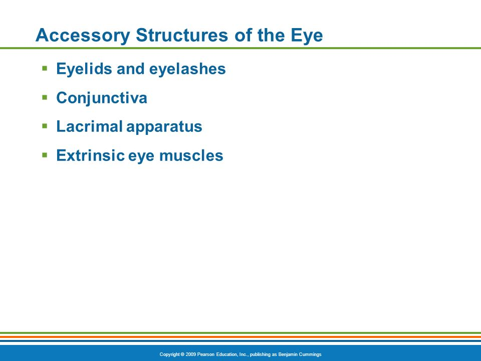 Copyright © 2009 Pearson Education, Inc., publishing as Benjamin Cummings Accessory Structures of the Eye  Eyelids and eyelashes  Conjunctiva  Lacrimal apparatus  Extrinsic eye muscles
