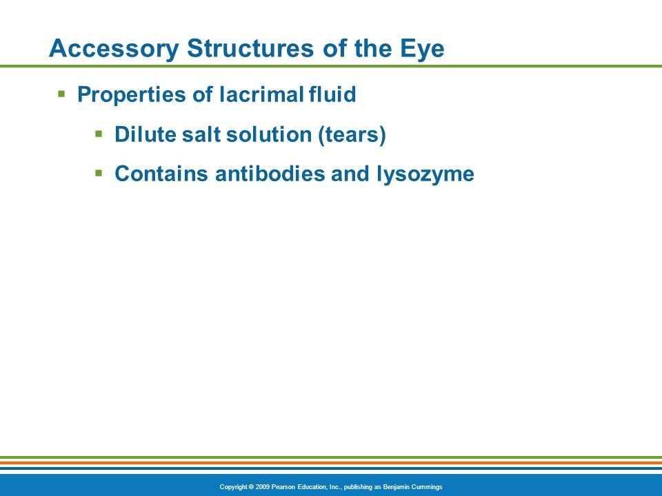 Copyright © 2009 Pearson Education, Inc., publishing as Benjamin Cummings Accessory Structures of the Eye  Properties of lacrimal fluid  Dilute salt solution (tears)  Contains antibodies and lysozyme