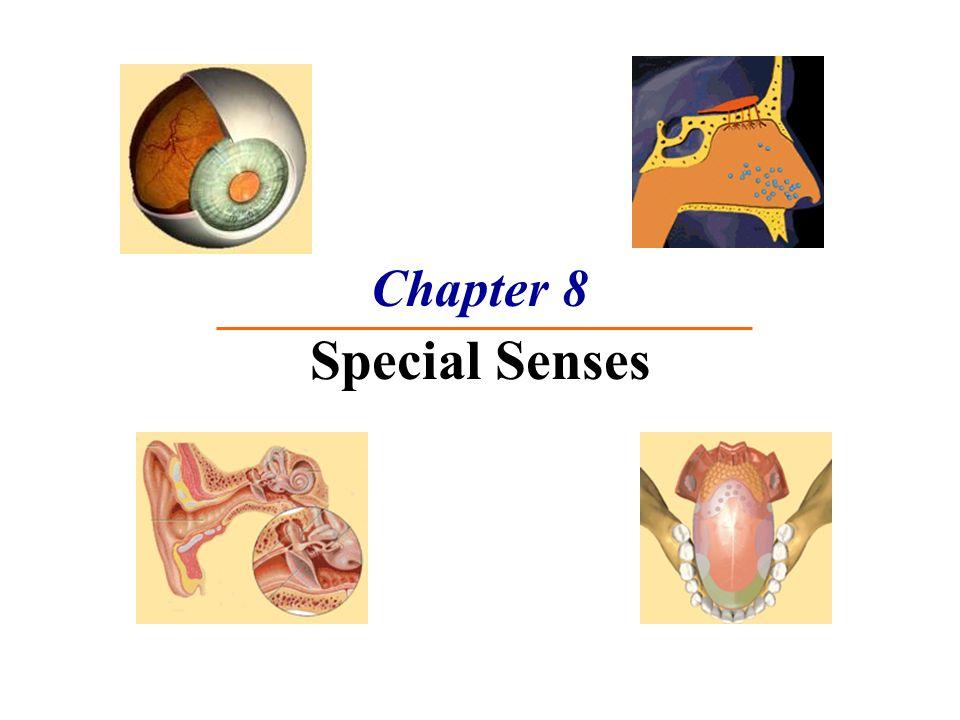 Chapter 8 Special Senses. The Senses Special senses Smell Taste ...