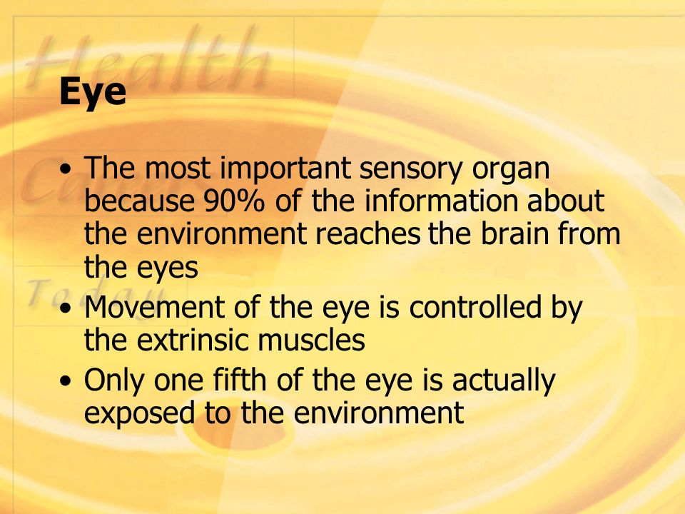 how the sensory organs function Anatomy and physiology of animals/the senses  the sense organs  sense organs allow animals to sense changes in the  its function is to equalise the air.