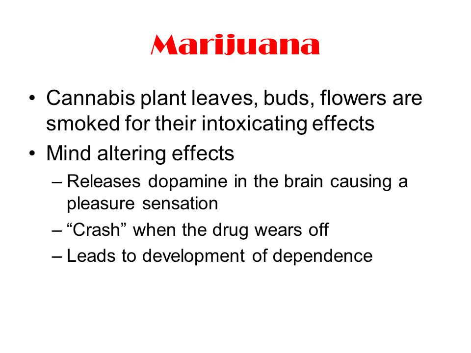 Marijuana Cannabis plant leaves, buds, flowers are smoked for their intoxicating effects Mind altering effects –Releases dopamine in the brain causing a pleasure sensation – Crash when the drug wears off –Leads to development of dependence