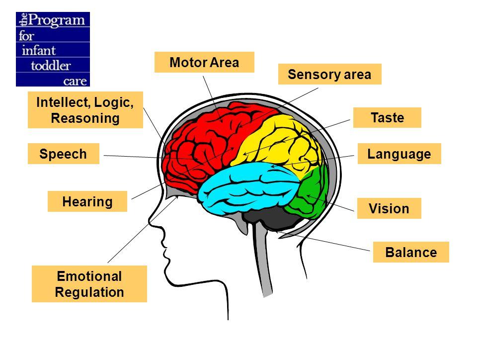 baby brain development food