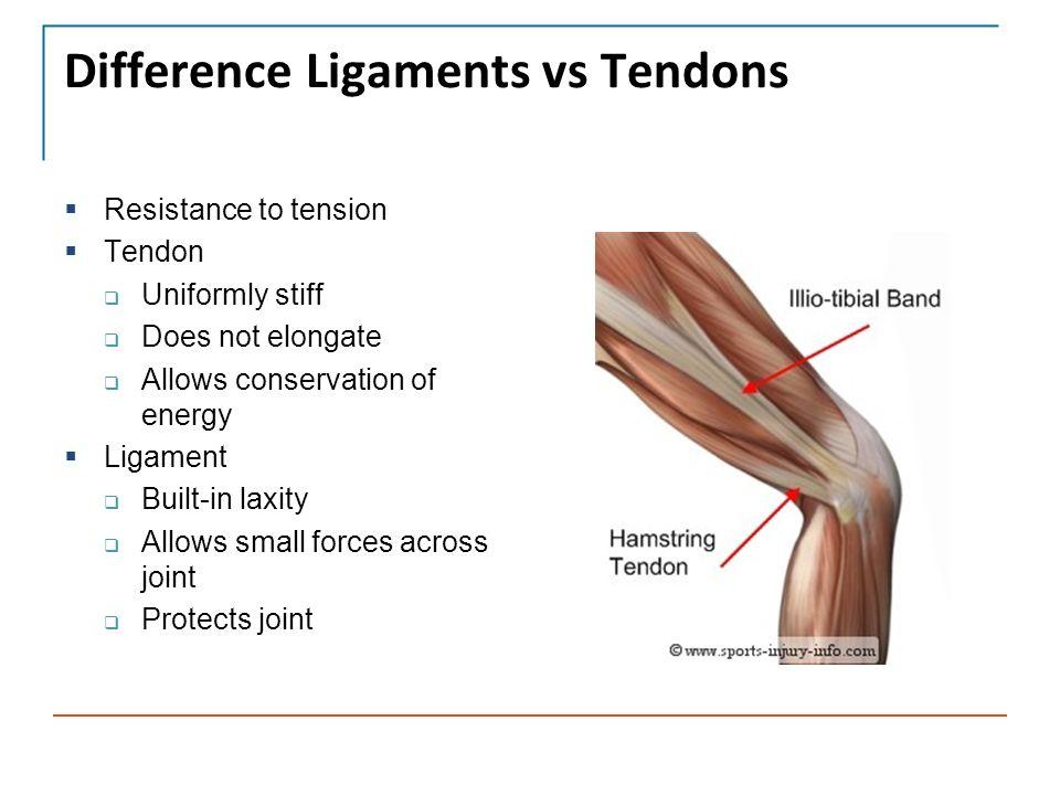 ligaments and tendons part 3 david flanigan md assistant professor