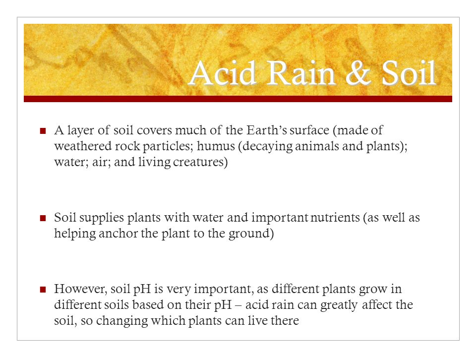 Acid Rain & Soil A layer of soil covers much of the Earth's surface (made of weathered rock particles; humus (decaying animals and plants); water; air; and living creatures) Soil supplies plants with water and important nutrients (as well as helping anchor the plant to the ground) However, soil pH is very important, as different plants grow in different soils based on their pH – acid rain can greatly affect the soil, so changing which plants can live there