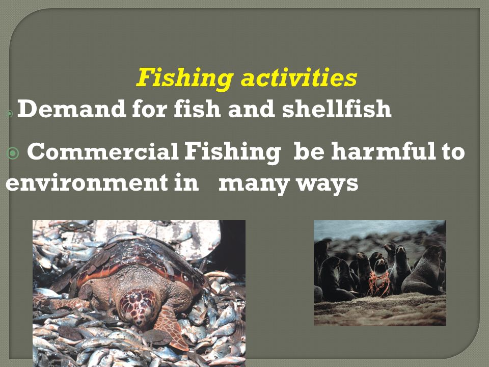 Fishing activities  Demand for fish and shellfish  Commercial Fishing be harmful to environment in many ways