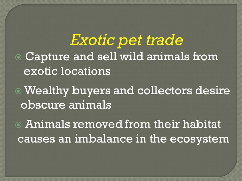 Exotic pet trade  Capture and sell wild animals from exotic locations  Wealthy buyers and collectors desire obscure animals  Animals removed from their habitat causes an imbalance in the ecosystem