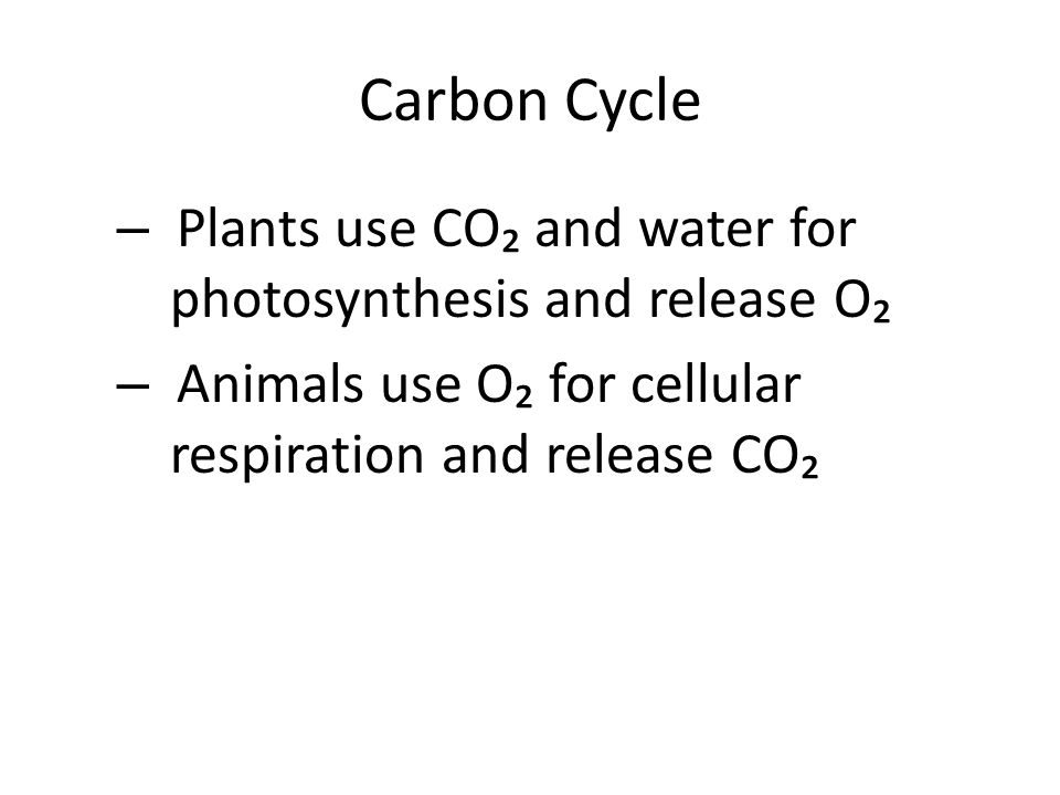Carbon Cycle – Plants use CO₂ and water for photosynthesis and release O₂ – Animals use O₂ for cellular respiration and release CO₂