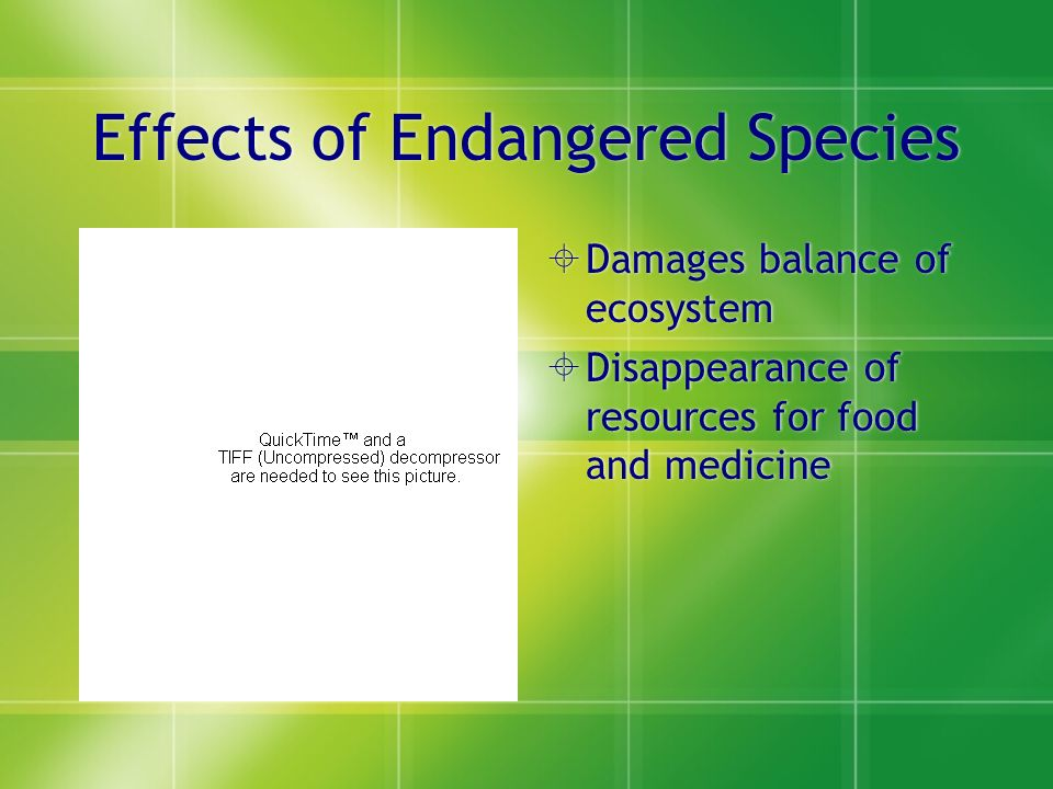 Effects of Endangered Species  Damages balance of ecosystem  Disappearance of resources for food and medicine