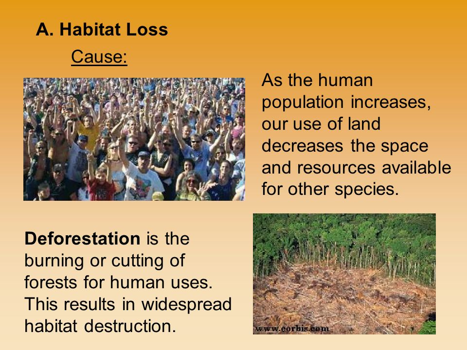 As the human population increases, our use of land decreases the space and resources available for other species.
