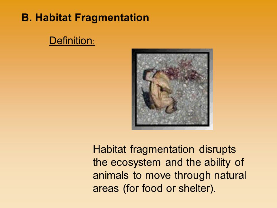 Habitat fragmentation disrupts the ecosystem and the ability of animals to move through natural areas (for food or shelter).