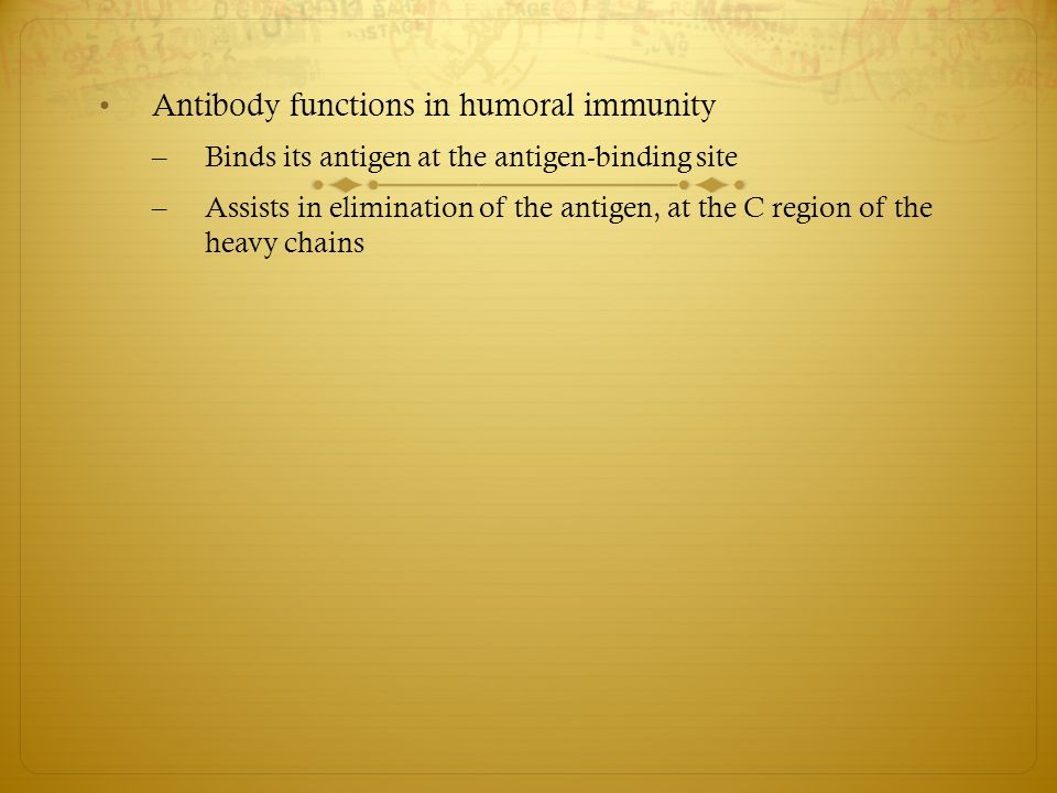 Antibody functions in humoral immunity – Binds its antigen at the antigen-binding site – Assists in elimination of the antigen, at the C region of the heavy chains