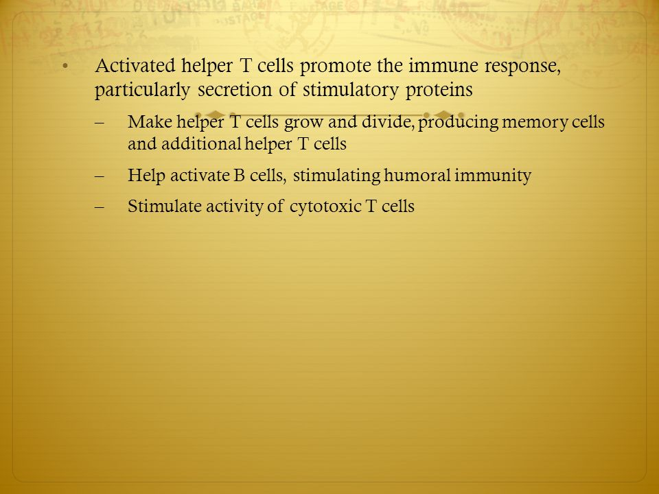 Activated helper T cells promote the immune response, particularly secretion of stimulatory proteins – Make helper T cells grow and divide, producing memory cells and additional helper T cells – Help activate B cells, stimulating humoral immunity – Stimulate activity of cytotoxic T cells