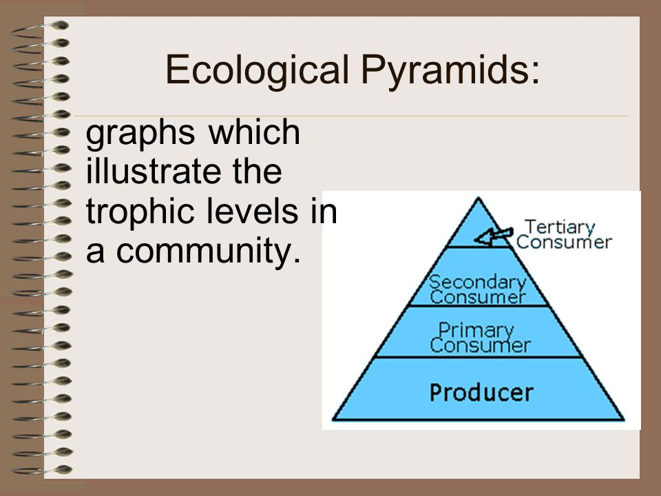 ecology review worksheet #2 answer key back