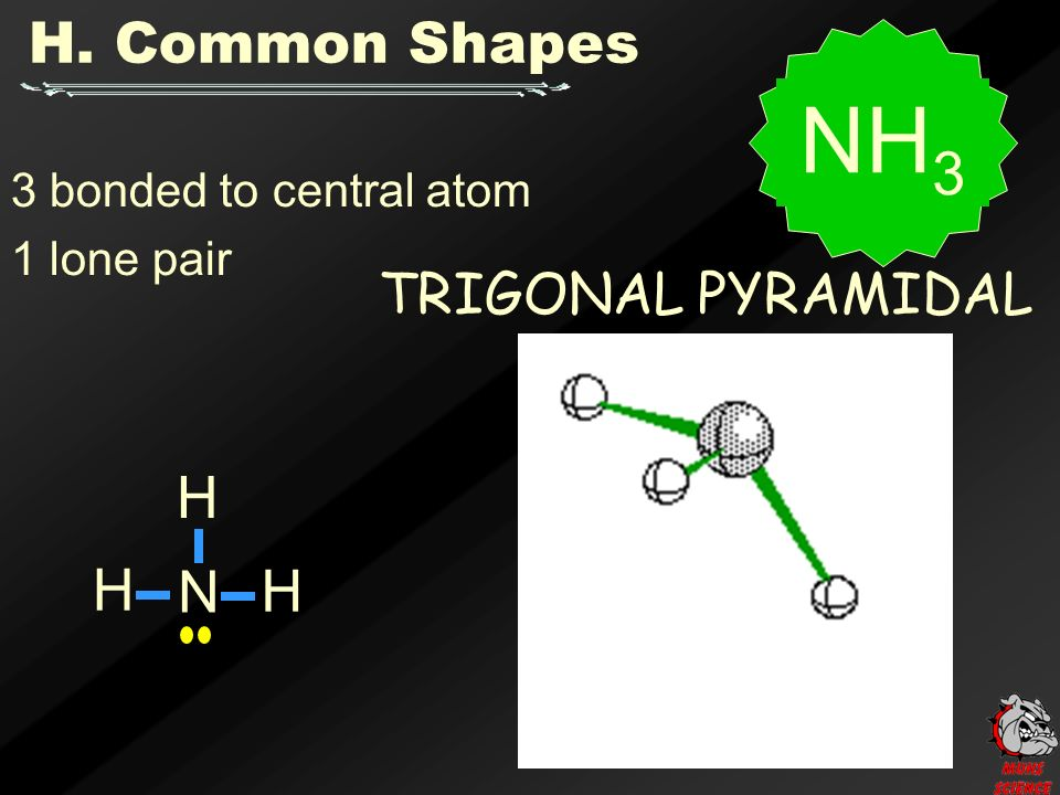 3 bonded to central atom 1 lone pair TRIGONAL PYRAMIDAL NH 3 H. Common Shapes N H H H