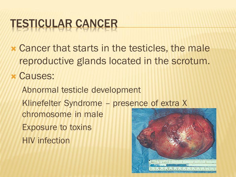 Biotopics asexual reproduction budding