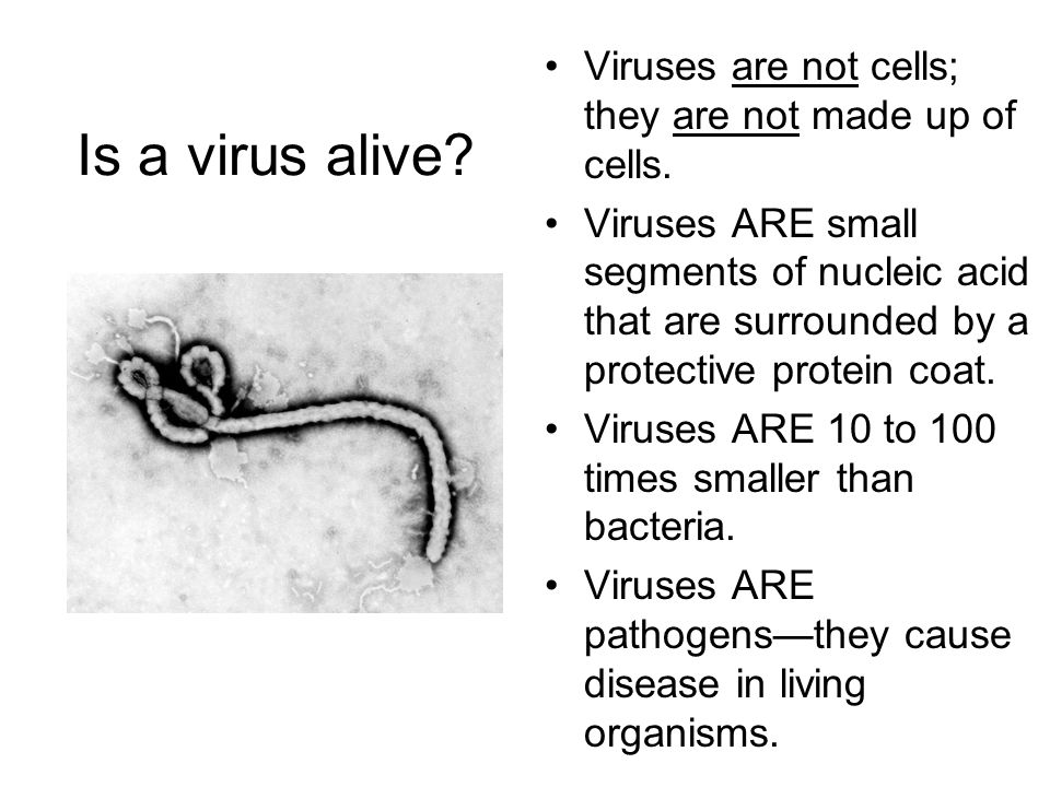 why are viruses not alive